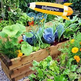 Наборы овощей и цветов