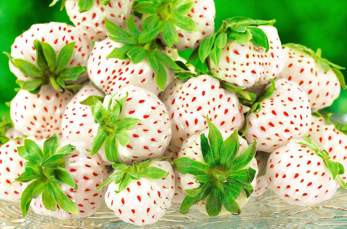 белые сорта клубники