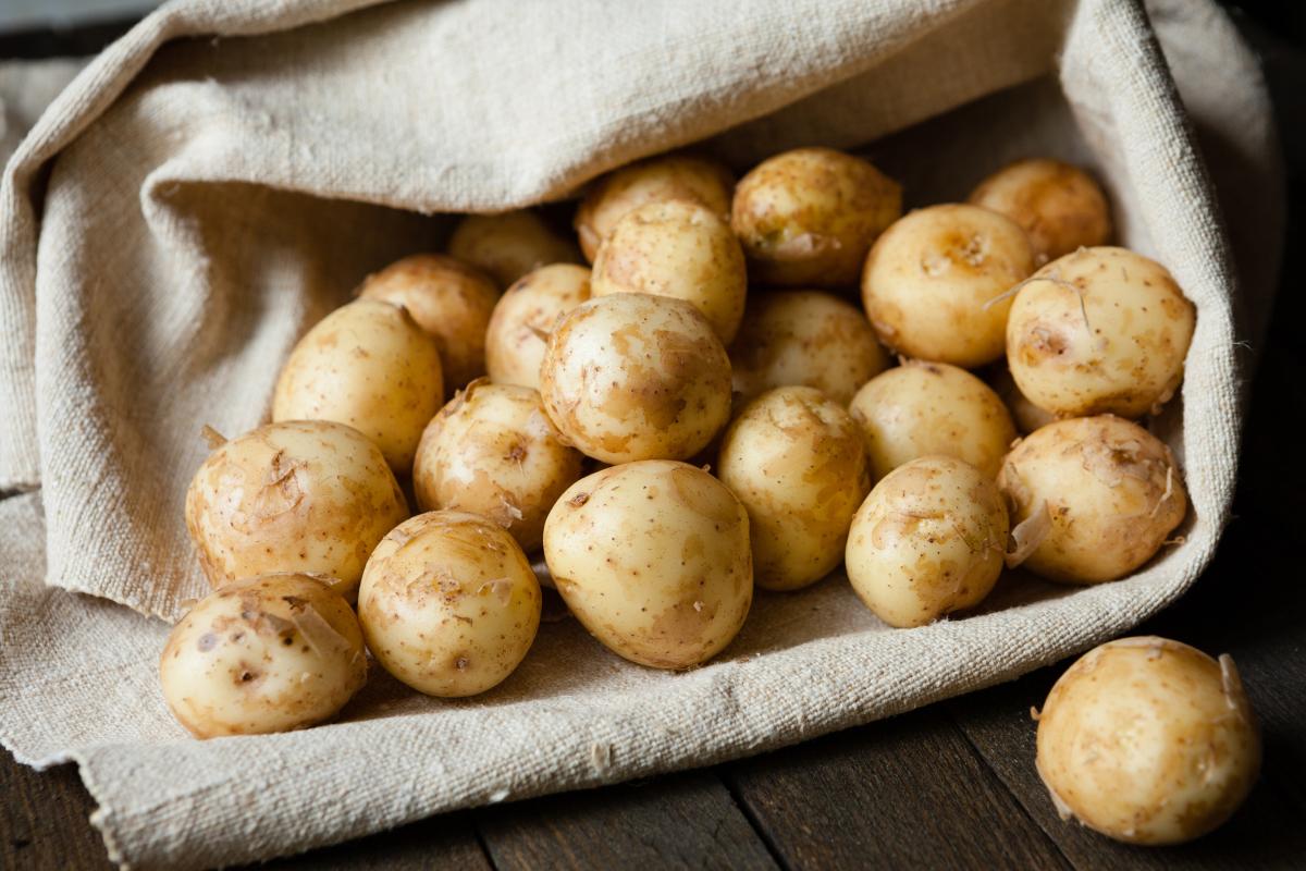 купить картофель для посадки в украине недорого